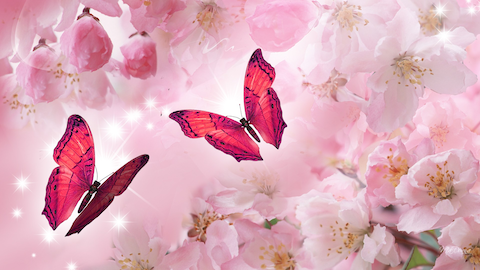 Two pink butterflies on a patterned pink background